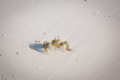 Petit crabe sur la plage Photos stock