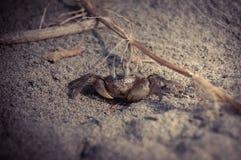 Petit crabe sur la plage Photographie stock