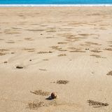 Petit crabe sur la plage, le fond ou le papier peint, province Krabi Image libre de droits