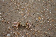 Petit crabe sur le plan rapproché de sable photos libres de droits
