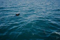 Petit dauphin dans l'eau Photo libre de droits