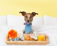 Petit déjeuner dans le lit Photographie stock