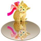 Petit emplacement de chaton sur le miroir Images libres de droits