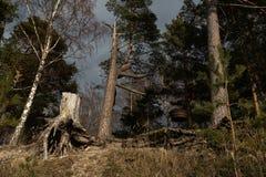 Petit endroit de pique-nique sur une plage dans une forêt sur une colline avec un gril rond de BBQ et un tronçon images stock