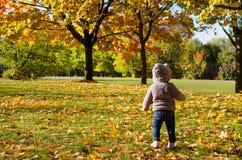 Petit enfant dans la forêt d'automne Image stock