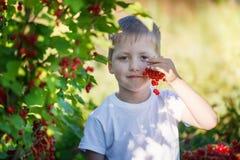 Petit enfant drôle prenant les groseilles rouges du buisson de groseille dans un jardin Images stock