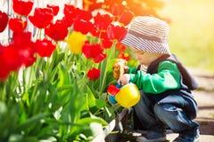 Petit enfant marchant près des tulipes sur le lit de fleur dans la belle journée de printemps Photo libre de droits