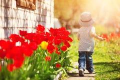 Petit enfant marchant près des tulipes sur le lit de fleur dans la belle journée de printemps Photo stock