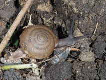 Petit escargot Image libre de droits