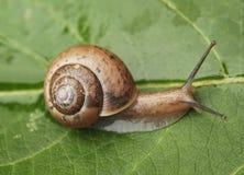 Petit escargot Photo stock