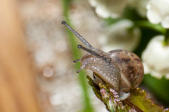 Petit escargot Photographie stock
