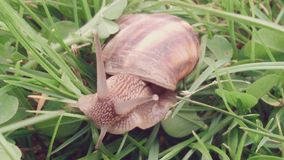 Petit escargot Photos libres de droits