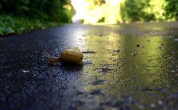 Petit escargot croisant le trottoir Images stock