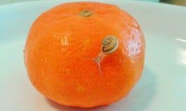 Petit escargot dans un monde d'orange de beauté Photo stock