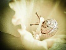 Petit escargot en fleur Image stock