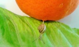 Petit escargot en mondes oranges et verts d'une beauté Photographie stock libre de droits
