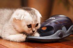 Petit et beau chaton tigré d'intérieur Photo libre de droits