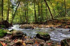 Petit fleuve de forêt images libres de droits