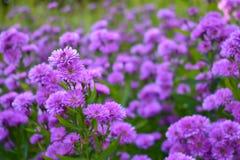 Petit fond pourpre de fleur Concept de nature photographie stock