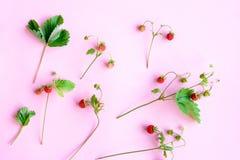Petit fraisier commun Photos stock
