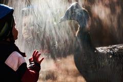 Petit garçon adorable dans le zoo hypnotisé par le casoar Images stock