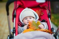 Petit garçon dans la poussette jouant avec des feuilles d'automne Images libres de droits