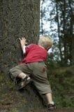 Petit garçon derrière un arbre image stock