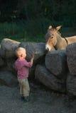 Petit garçon et âne dans le zoo Photographie stock libre de droits