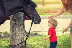 Petit garçon et cheval regardant entre eux Image stock