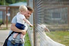 Petit garçon et sa chèvre de alimentation de père Photo stock