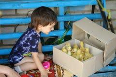 Petit garçon heureux avec les canetons mignons d'isolement Images stock