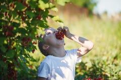 Petit garçon heureux mangeant une groseille rouge dans un jardin Images stock