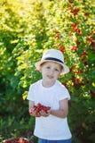 Petit garçon heureux tenant une groseille rouge dans un jardin Image stock