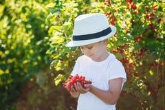 Petit garçon heureux tenant une groseille rouge dans un jardin Photographie stock libre de droits