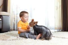 Petit garçon jouant avec le crabot affectueux York Photos libres de droits