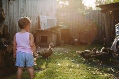 Petit garçon marchant dans la basse cour Image stock