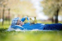 Petit garçon mignon avec le printemps de canetons, jouant ensemble images libres de droits