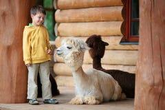 Petit garçon mignon jouant avec un alpaga de chéri Images stock