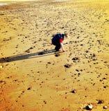 Petit garçon prenant des pierres sur une plage Photographie stock libre de droits
