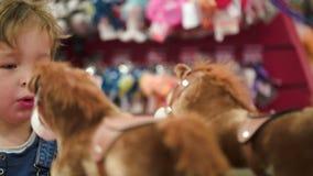 Petit garçon regardant les chevaux de jouet dans la boutique banque de vidéos