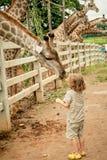 Petit garçon alimentant une girafe au zoo Image stock