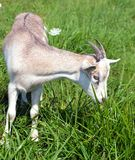 Petit gosse mignon mangeant l'herbe Photographie stock libre de droits