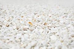 Petit gravier blanc Photographie stock libre de droits