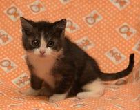 Petit gris-foncé avec le chaton blanc Images stock