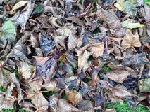 Petit groupe d'Autumn Leaves - fond Photos stock