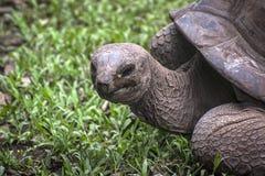 Petit groupe de la tête d'une tortue énorme sauvage Images libres de droits