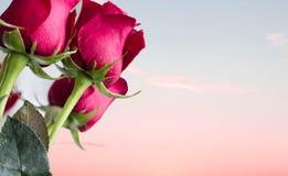 Petit groupe de roses rouges au premier plan avec le coucher du soleil à l'arrière-plan Images libres de droits