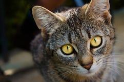 Petit groupe de tête de chat photo stock