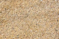 Petit groupe de texture de sable d'Hawaï Photos libres de droits