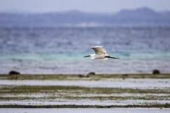 Petit héron volant au-dessus de l'Océan Indien, Memba, Mozambique Image stock